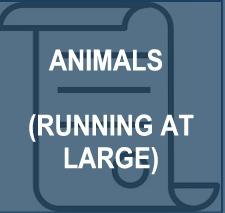 Animals_Running